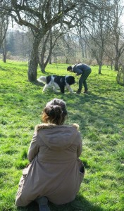 Charlotte Duranton studying dog-human interactions